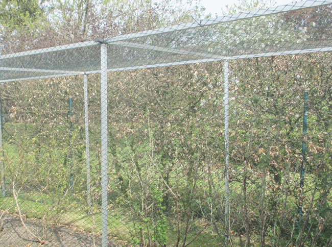 BUILD YOUR FRUIT AND VEGETABLE PROTECTION CAGE YOURSELF